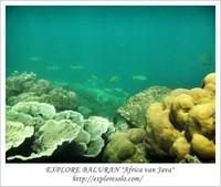 Pesona bawah laut pantai Bama, Baluran