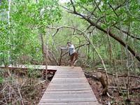 Trekking Mangrove