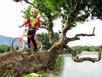 Rayuan gowes di pohon