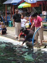 Banyak wisatawan yang datang penasaran dengan keberadaan Ikan Dewa yang konon katanya ini sangat misterius