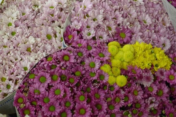 Unduh 770+ Gambar Jenis Bunga Aster HD Gratid