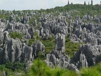 Pepohonan hijau mengisi sela bebatuan (atlasobscura.com)
