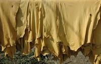 kulit yang digunakan sebagai bahan jaket (sumber: arifh.blogdetik.com)