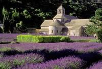 Kebun lavender di Provence (house-gordes-rovence.com)