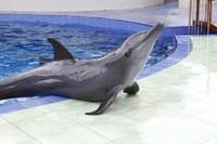 Lumba-lumba siap untuk berfoto (Dok. Batang Dolphins Center)