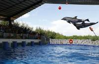 Atraksi lumba-lumba (Dok. Batang Dolphins Center)
