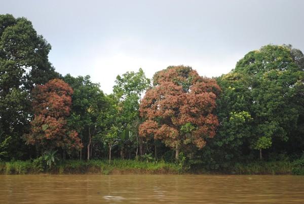 Warna warni tumbuhan di Sungai Mahakam