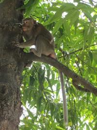 Monyet lucu penghuni Situ Lembang (Fitraya/detikTravel)