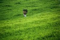 Pemandangan serba hijau yang khas (Angela Jennifer Aroemrasni/dTraveler)