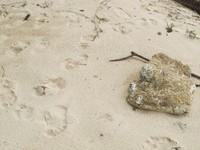 Lihatlah pasir putihnya (Afif/detikTravel)