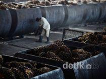 Produksi Minyak Sawit Digenjot