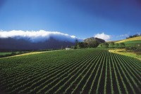 Cape Winelands (eyesonafrica.net)