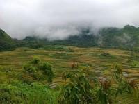 Kabut yang menyelimuti Malino (Misbah/dtraveler)