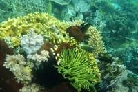 Terumbu karang yang berwarna-warni (Gilang Adhipratama/ACI)