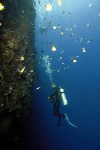 Terumbu karang yang terjal vertikal (indonesia.travel)