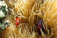 Ikan yang lucu dan berwarna-warni (Gilang Adhipratama/ACI)