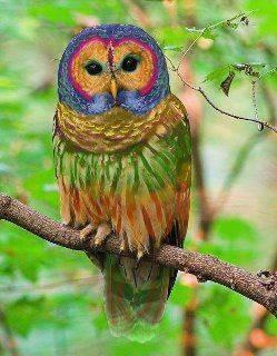 99+ Foto Gambar Burung Hantu Warna  Paling Keren Gratis