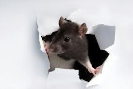 Juriah Kira Cium Bangkai Tikus, Ternyata Anak Sendiri Sudah Jadi Mayat