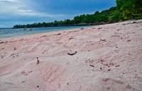 Pasir Pantai Tangsi yang berwarna merah muda