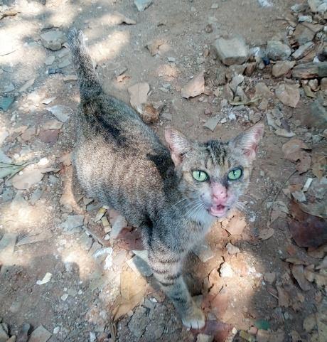 Alasan Kebersihan, Dinas Peternakan Jakut Ciduk 424 Ekor Kucing Liar