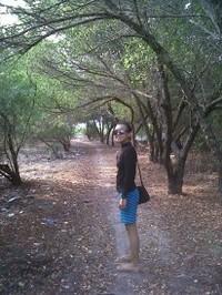 hutan bakau dipedalaman