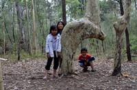Pohon ini juga menjadi daya tarik wisatawan