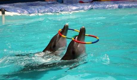 Menhut: Saya Bertanggung Jawab Jika Masih Ada Sirkus Lumba-lumba
