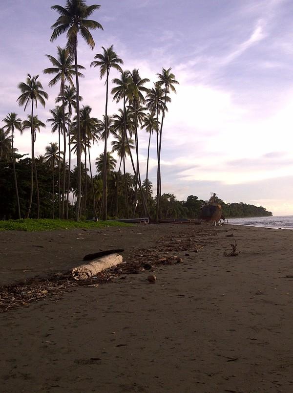Deretan pohon kelapa di tepi pantai