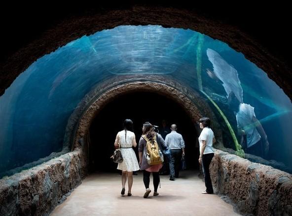 Akuarium air tawar raksasa di River Safari (CNN Travel)