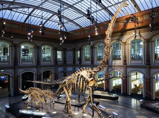 Museum fuer Naturkunde, Berlin, Jerman (Museum fuer Naturkunde)