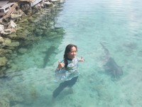 swimming with baby shark