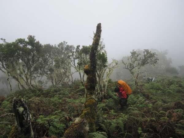 Berjalan di antara hutan pakis binaiya (Odang Udjur/d'Traveler)
