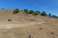 Desa Bitobe termasuk salah satu daerah terparah di Kupang. Kontur topografinya berbukit-bukit, dengan kondisi infrastruktur jalan yang tidak bagus, serta seringkali tidak bisa dilalui bila musim hujan. Jarak dari kota Kupang sekitar 180-200 km, yang karena kondisi jalan maka harus ditempuh dengan waktu 5-7 jam dari Kupang. (Foto: Merry/detikHealth)