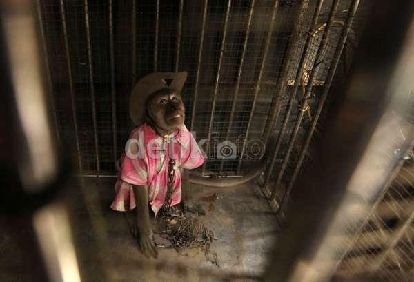 Penyiksaan Topeng Monyet, dari Dipukuli hingga Digantung