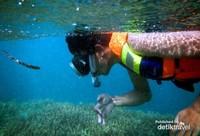 Snorkeling di Gili Kondo