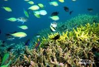 Terumbu karang dan ikan warna-warni di Gili Kondo