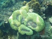 bawah laut Pulau Harapan