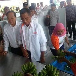 Dahlan Kaget BUMN Bisa Ekspor Pisang dalam Waktu 1 Tahun