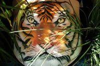 Perut hamil berubah menjadi harimau yang sedang bersembunyi di semak-semak. Ini merupakan lukisan pemenang Goodwin's award. (Foto: Oddee)