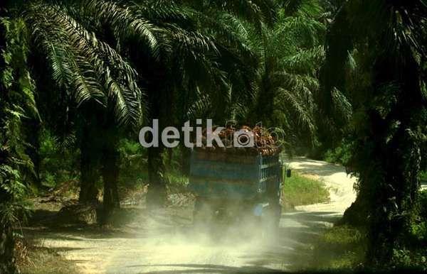Menhut Sebut Ada Sejuta Hektar Lahan Sawit Tanpa Izin di Riau