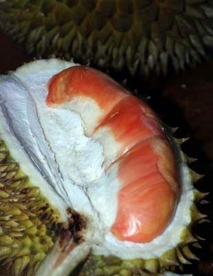 Pengiriman Buah Durian Merah Dikeluhkan Ini Jawaban Bupati Anas