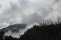 Di Gunung Papandayan tidak seluruh pohon mati terkena erupsi. Di punggungan bukit ini, pohon kering bersanding dengan hutan hijau menciptakan pemandangan yang indah.