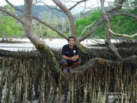 Bakau-bakau dengan akar yang menjalar ke atas permukaan