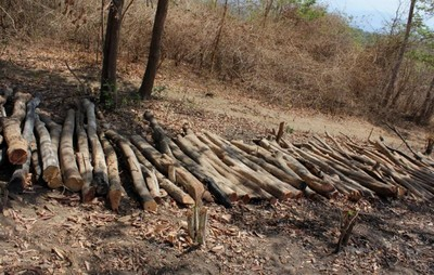 Duh! Sedihnya Melihat Hutan Rusak di Pulau Moyo