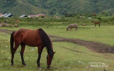 Pacuan Kuda di Takengon, Serunya Bikin Lupa Bernafas