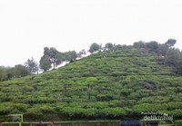 Bukit Borobudur tampak dekat