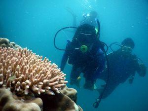 Pulau Cina, Spot Diving Keren di Jawa Timur