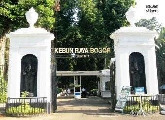 4 Pengunjung Tewas dan 21 Terluka Tertimpa Pohon Tumbang di Kebun Raya Bogor