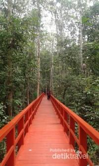 Jembatan merah di Hutan Pelawan.