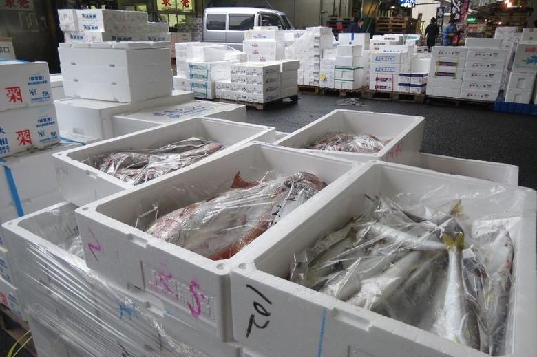 Ikan-ikan segar di Pasar Tsukiji (Fitraya/detikTravel)